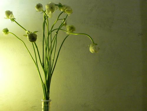 11109adflowers.jpg