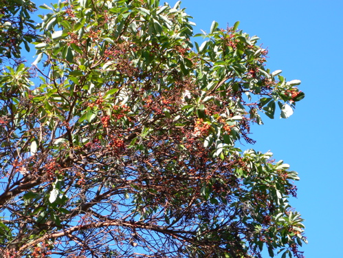 122407blueskyredberries.jpg
