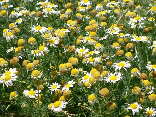 8507flowers2.jpg