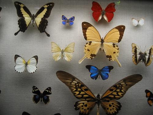 32405butterflies.JPG