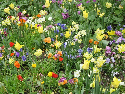 41804parisflowers.jpg