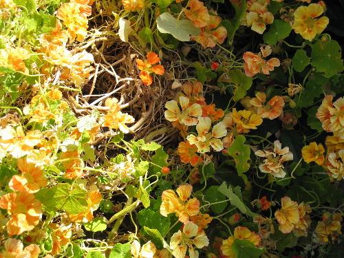 61604orangeflowers.jpg