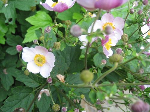 81804flowerspicspurplewhite.jpg