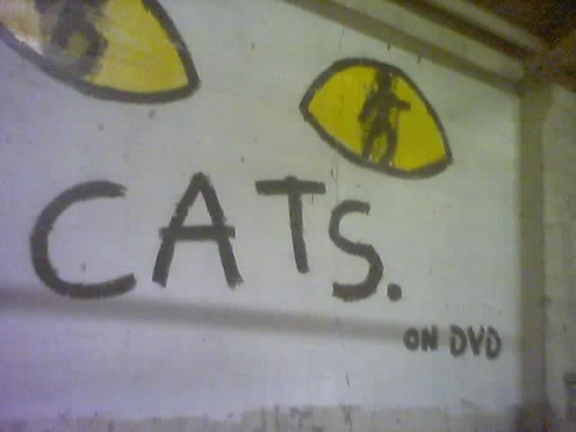 CATS ON DVD.jpg