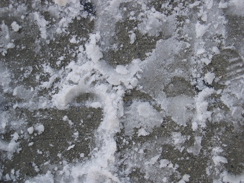 snowprints.jpg